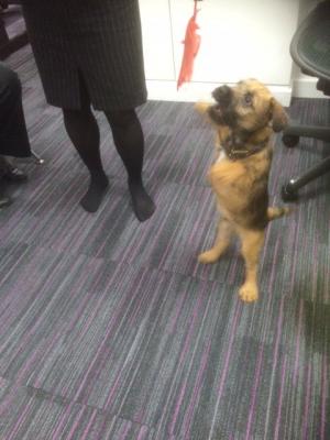 Dog at Cavendish