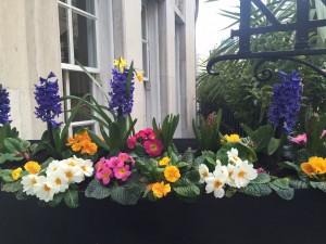 Hallam Flowers 2 IMG_4592