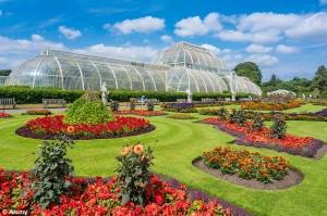Kew 1412064850688_wps_1_E6NR14_Kew_Gardens_Palm_H